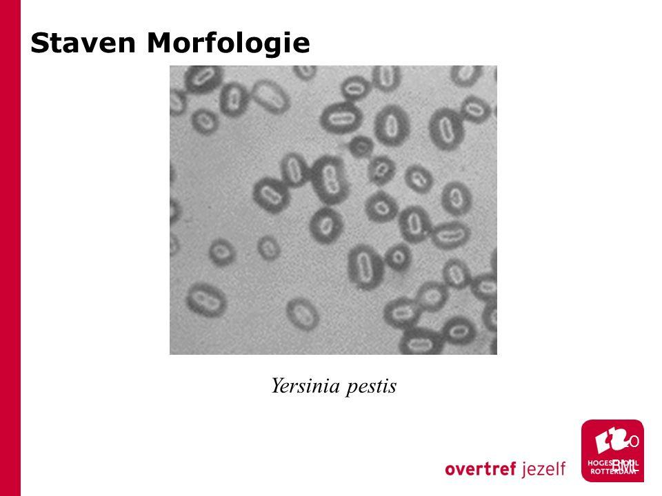 Staven Morfologie HLO BML Yersinia pestis