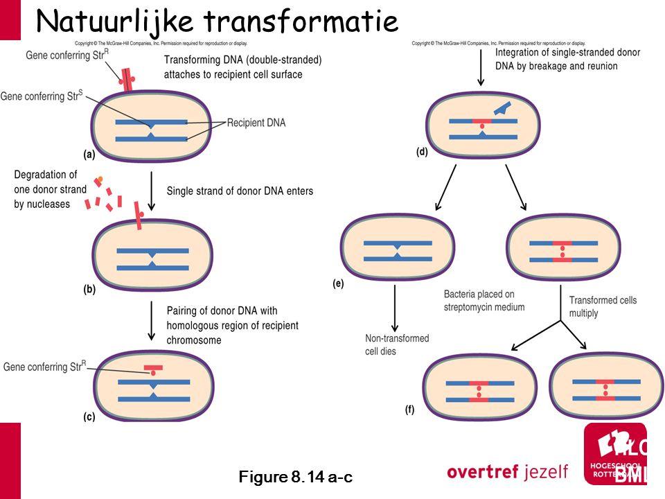 Natuurlijke transformatie Figure 8.14 a-c HLO BML