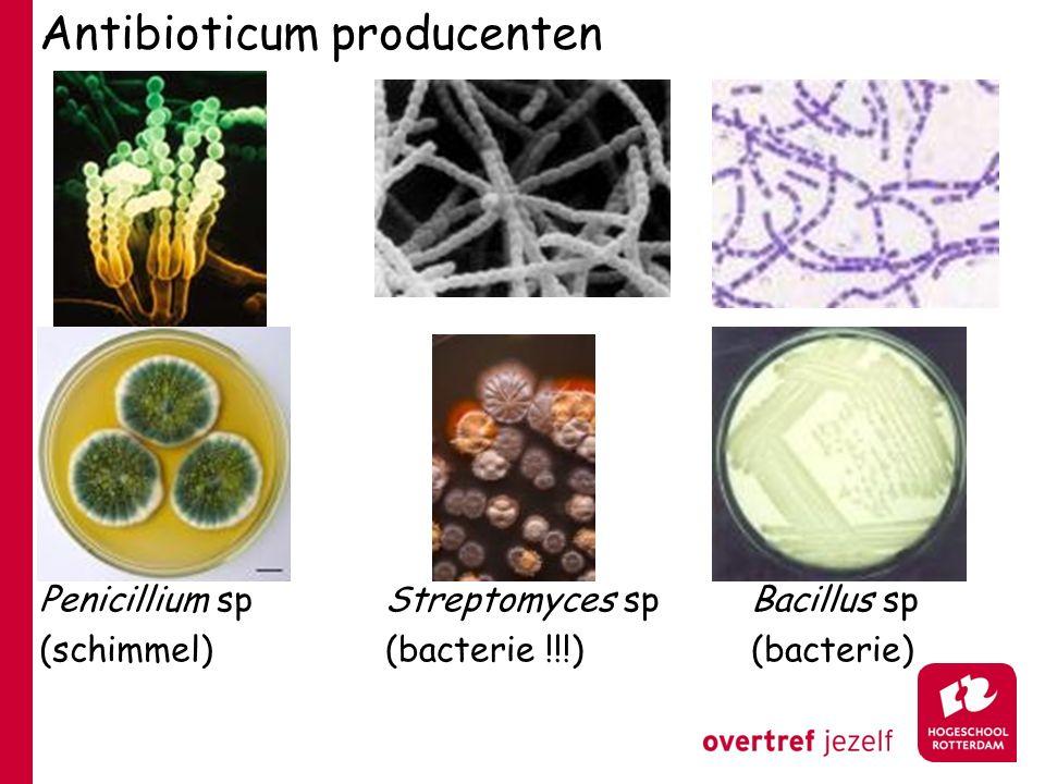 Antibioticum producenten Penicillium sp (schimmel) Streptomyces sp (bacterie !!!) Bacillus sp (bacterie)