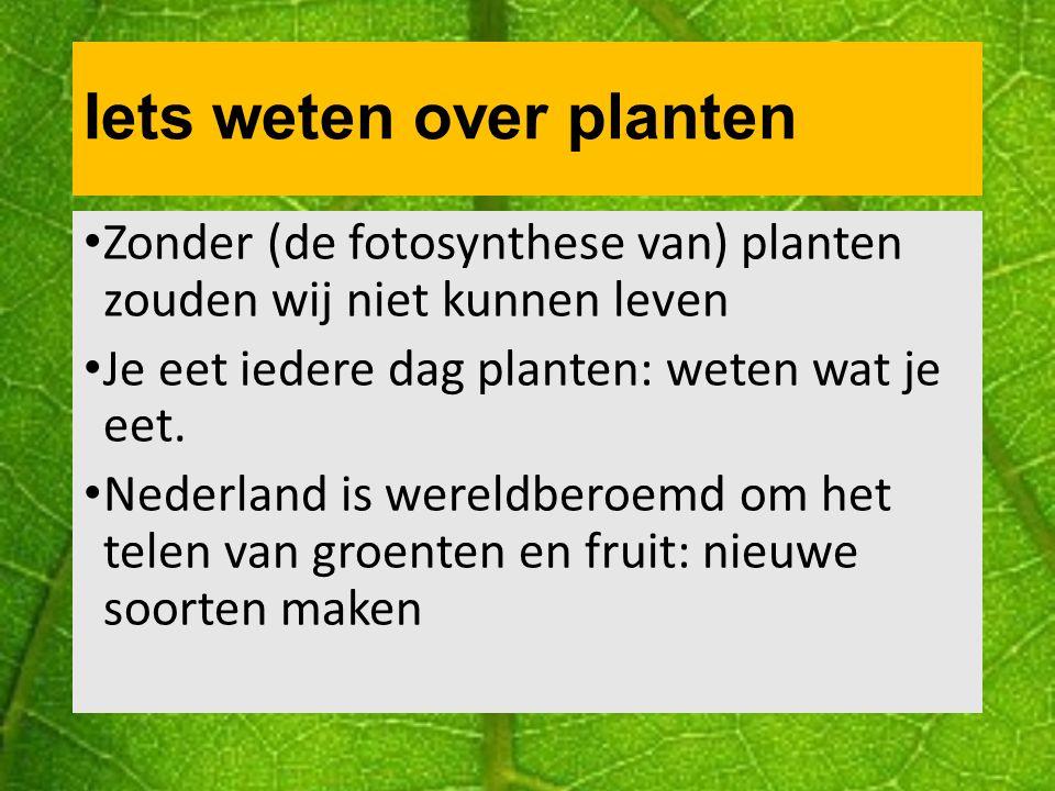 Levenscyclus van een plant: een zaadje Je weet al hoe een zaad van een bruine bonen plant eruit ziet: Zaadhuid: beschermt de kiem en zaadlobben Poortje: gaatje in de zaadhuid om water op te nemen.