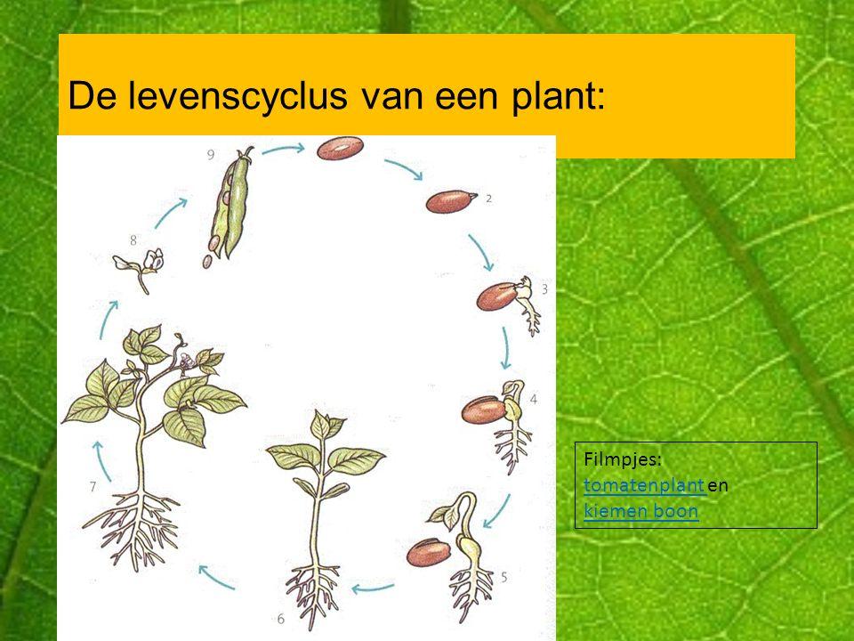Teler en kweker In Nederland zijn veel goede kwekers en telers van planten.
