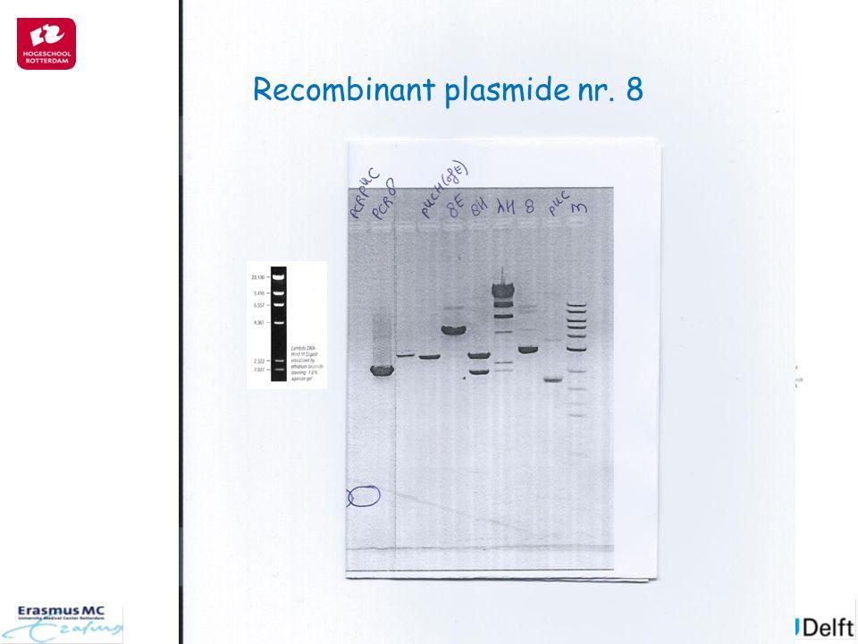 Recombinant plasmide nr. 8