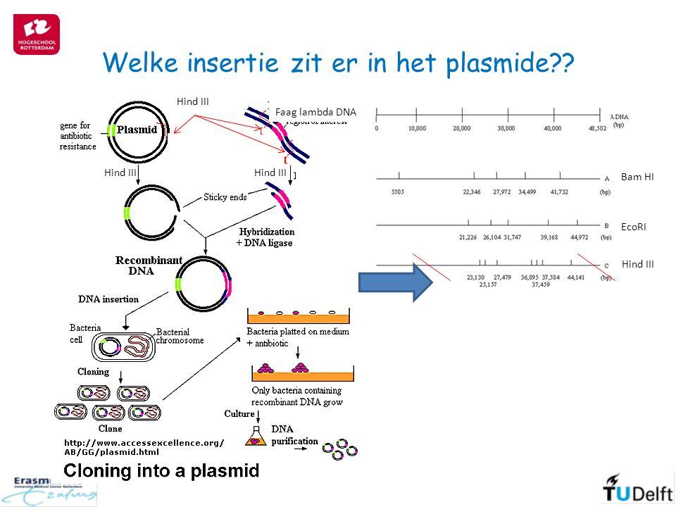 Welke insertie zit er in het plasmide?? EcoRI Hind III Faag lambda DNA Hind III Bam HI