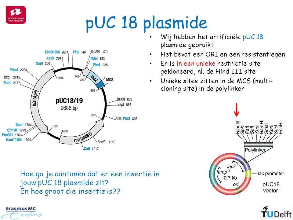 pUC 18 plasmide Wij hebben het artificiële pUC 18 plasmide gebruikt Het bevat een ORI en een resistentiegen Er is in een unieke restrictie site gekloneerd, nl.