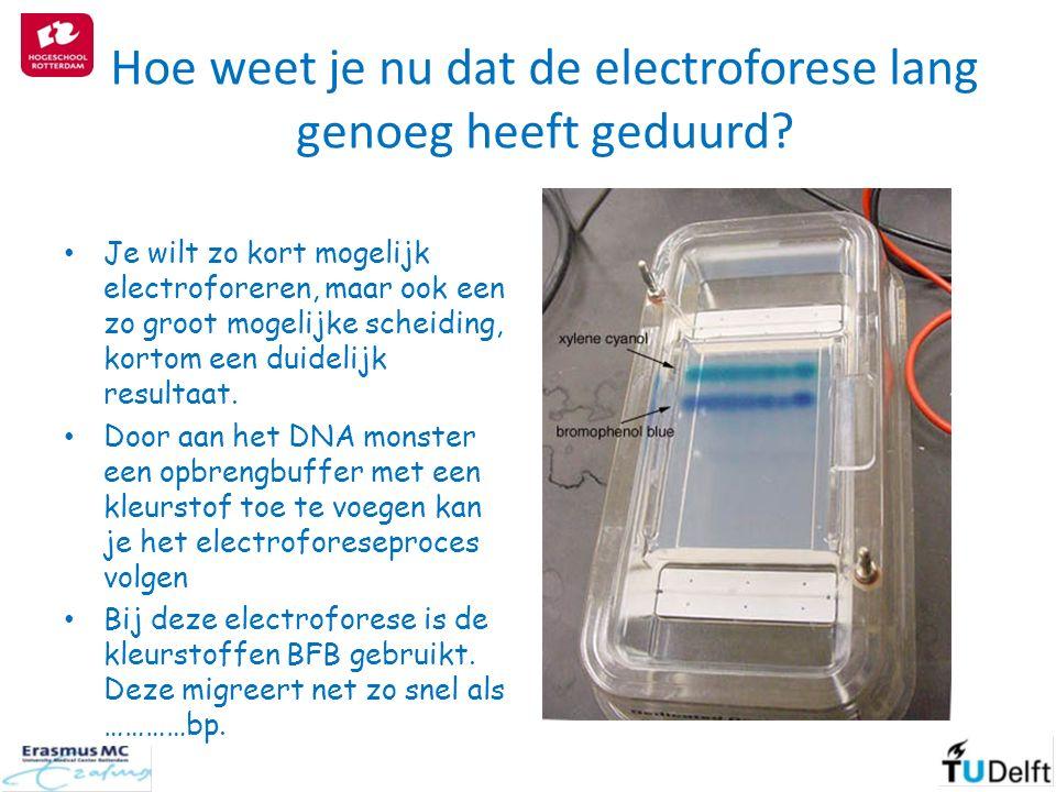 Hoe weet je nu dat de electroforese lang genoeg heeft geduurd? Je wilt zo kort mogelijk electroforeren, maar ook een zo groot mogelijke scheiding, kor