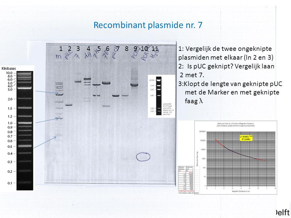 Experimenten van week 6 Recombinant plasmide nr. 7 1: Vergelijk de twee ongeknipte plasmiden met elkaar (ln 2 en 3) 2: Is pUC geknipt? Vergelijk laan
