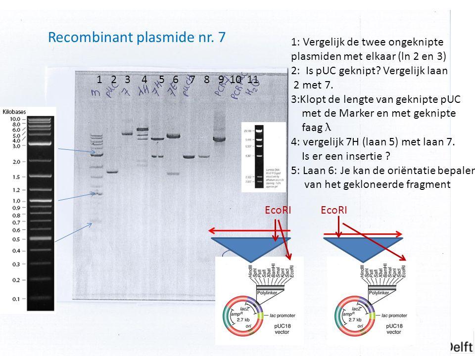 Het denatureren van het DNA gebeurt bij ± 94 °C, 20 – 30 seconden is vaak al genoeg.