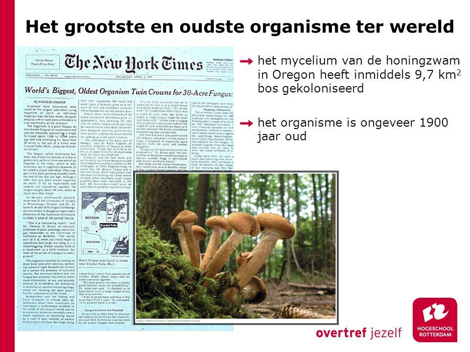 Het grootste en oudste organisme ter wereld het mycelium van de honingzwam in Oregon heeft inmiddels 9,7 km 2 bos gekoloniseerd het organisme is ongeveer 1900 jaar oud