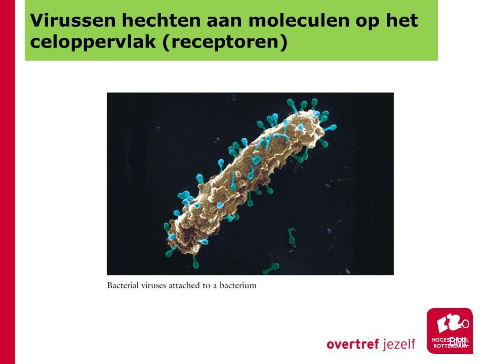 Virussen hechten aan moleculen op het celoppervlak (receptoren) HLO BML