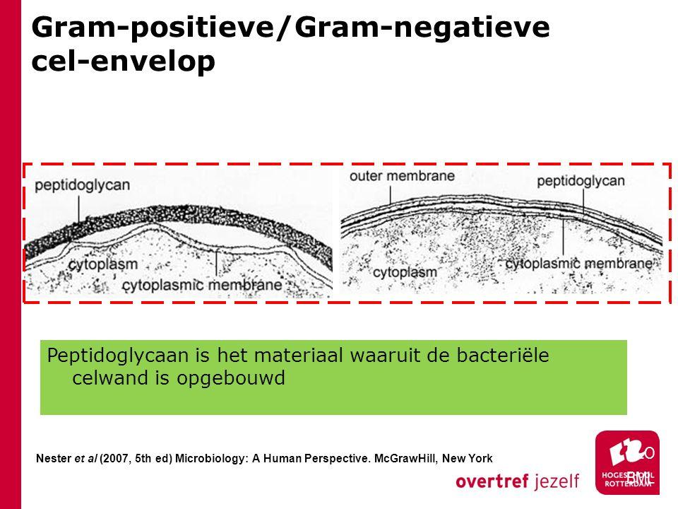 Gram-positieve/Gram-negatieve cel-envelop HLO BML Nester et al (2007, 5th ed) Microbiology: A Human Perspective. McGrawHill, New York Peptidoglycaan i