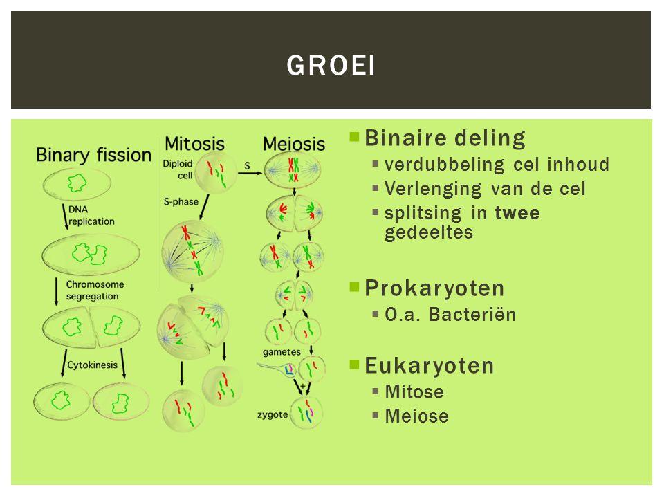  Binaire deling  verdubbeling cel inhoud  Verlenging van de cel  splitsing in twee gedeeltes  Prokaryoten  O.a. Bacteriën  Eukaryoten  Mitose