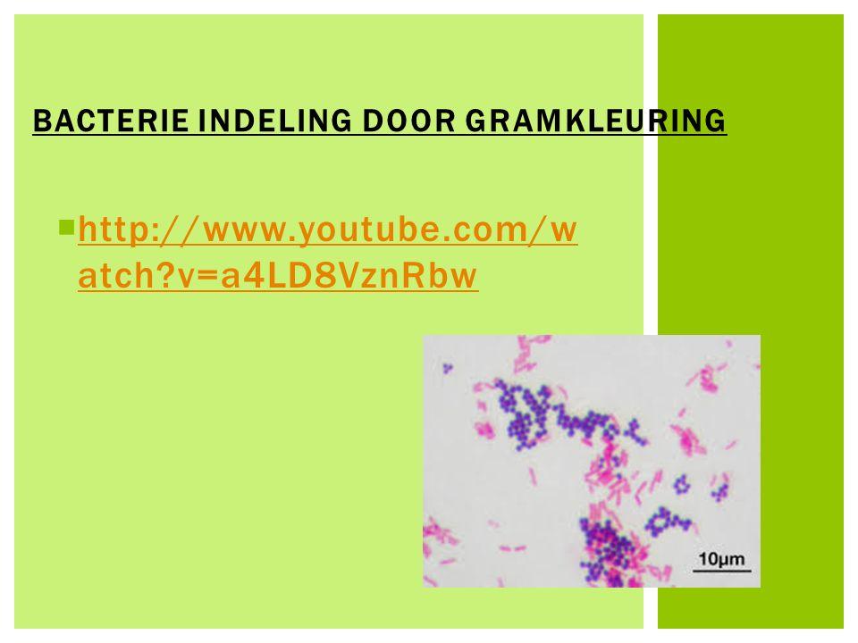 BACTERIE INDELING DOOR GRAMKLEURING  http://www.youtube.com/w atch?v=a4LD8VznRbw http://www.youtube.com/w atch?v=a4LD8VznRbw