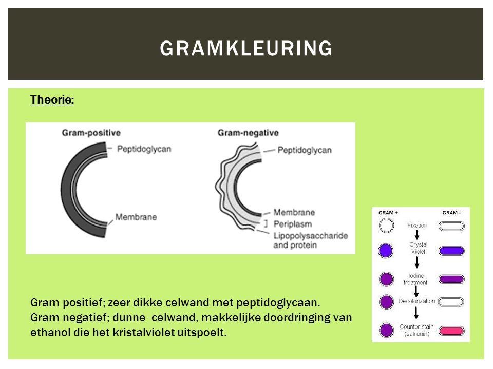 Gram positief; zeer dikke celwand met peptidoglycaan. Gram negatief; dunne celwand, makkelijke doordringing van ethanol die het kristalviolet uitspoel