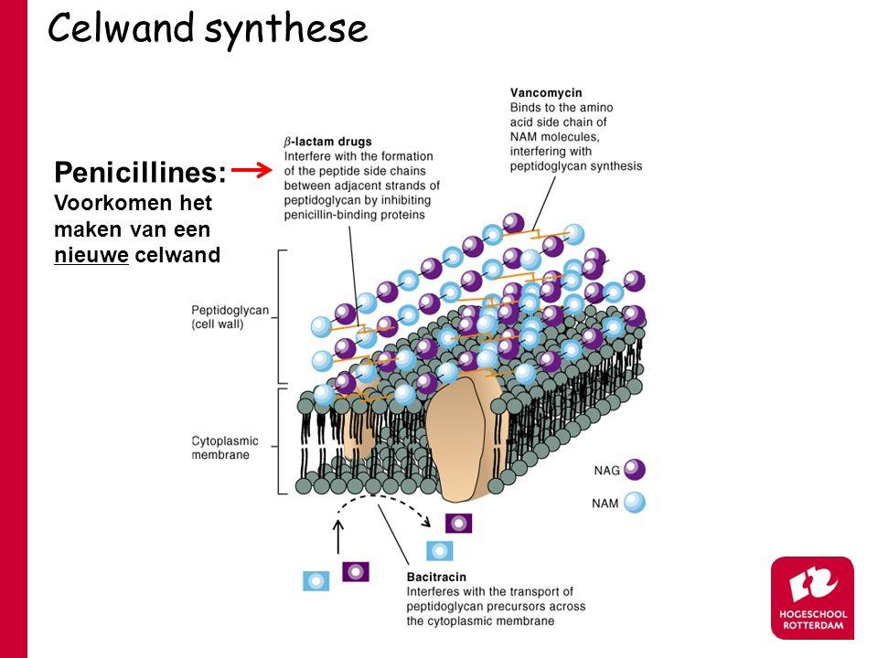 Celwand synthese Penicillines: Voorkomen het maken van een nieuwe celwand