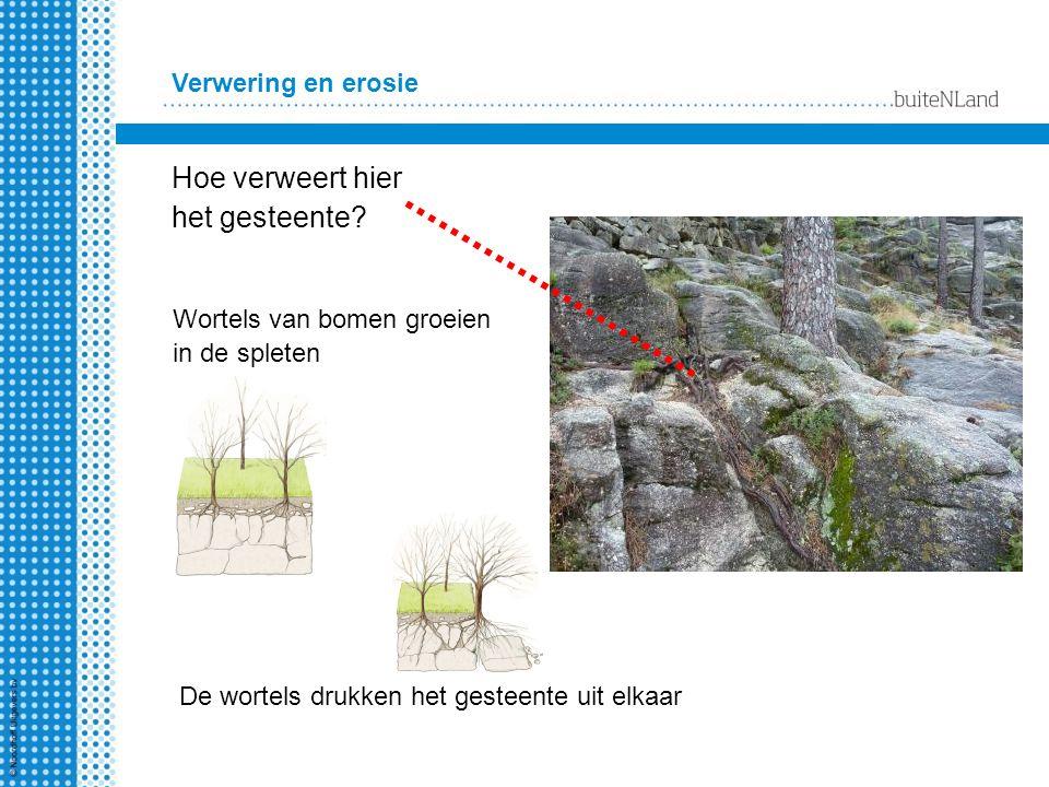 Verwering en erosie Hoe verweert hier het gesteente? Wortels van bomen groeien in de spleten De wortels drukken het gesteente uit elkaar