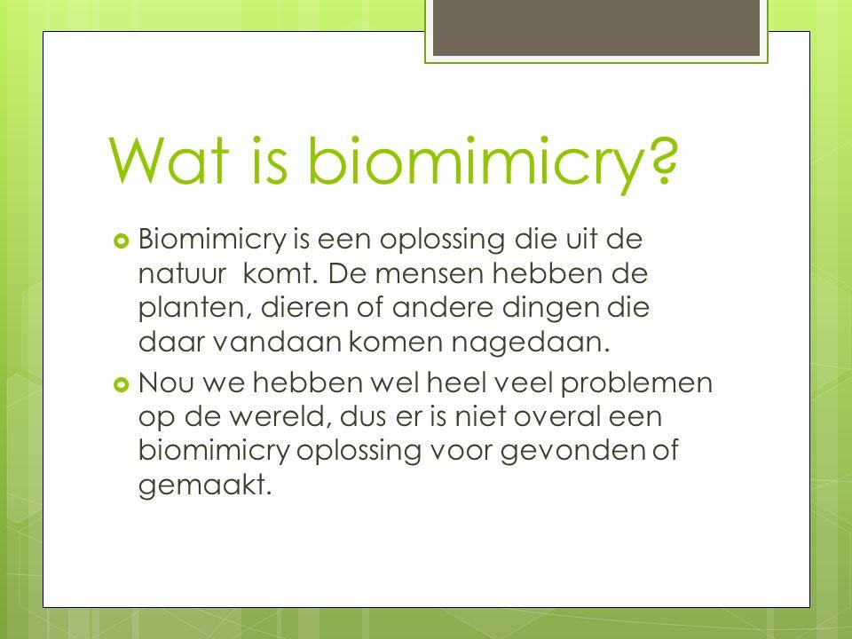 Wat is biomimicry?  Biomimicry is een oplossing die uit de natuur komt. De mensen hebben de planten, dieren of andere dingen die daar vandaan komen n