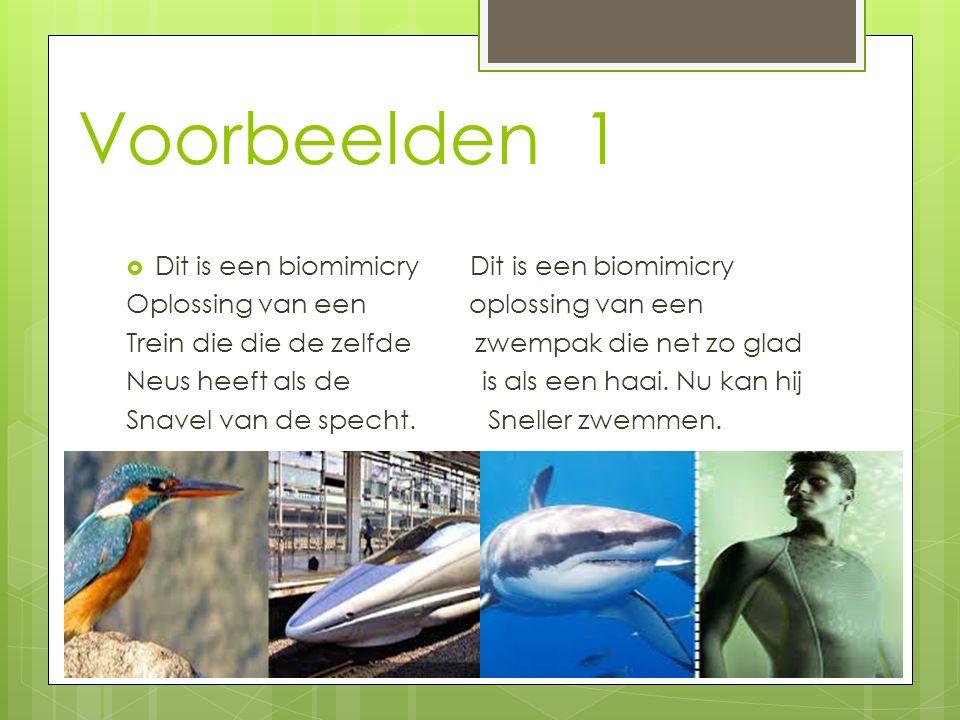 Voorbeelden 1  Dit is een biomimicry Dit is een biomimicry Oplossing van een oplossing van een Trein die die de zelfde zwempak die net zo glad Neus h
