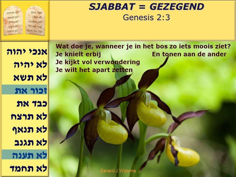 Gerard J.Wijtsma SJABBAT = GEZEGEND Genesis 2:3 Wat doe je, wanneer je in het bos zo iets moois ziet? Je knielt erbij Je kijkt vol verwondering Je wil