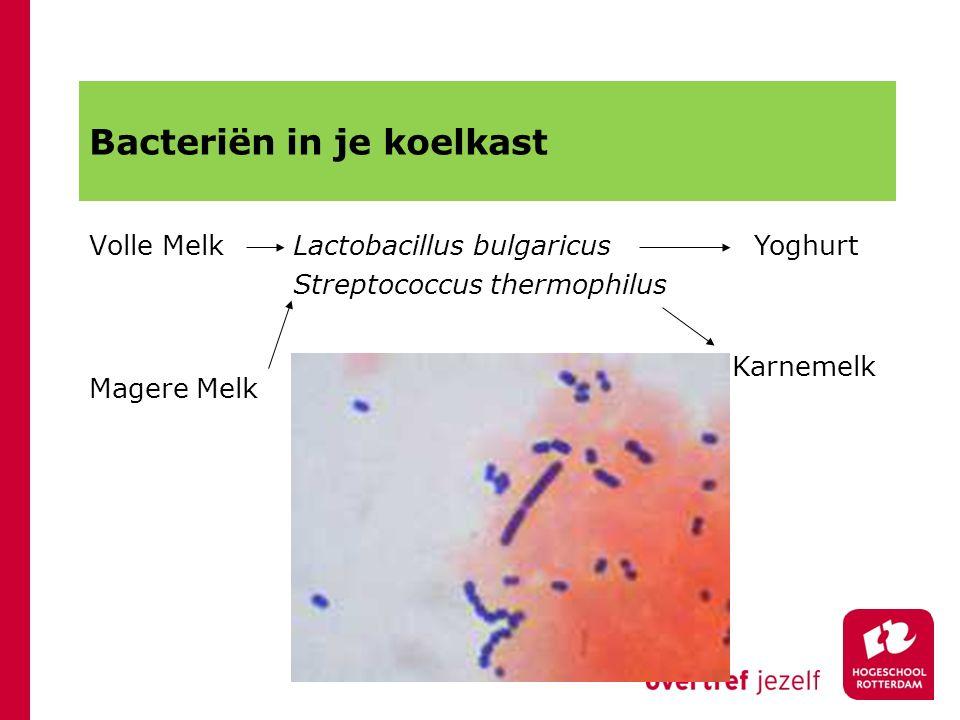 Bacteriën in je koelkast Volle MelkLactobacillus bulgaricus Streptococcus thermophilus Yoghurt Magere Melk Karnemelk