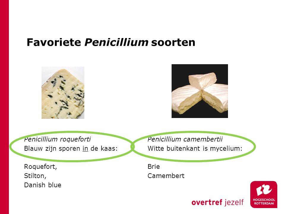 Favoriete Penicillium soorten Penicillium roqueforti Blauw zijn sporen in de kaas: Roquefort, Stilton, Danish blue Penicillium camembertii Witte buite