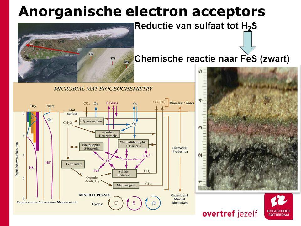 Anorganische electron acceptors Reductie van sulfaat tot H 2 S Chemische reactie naar FeS (zwart)