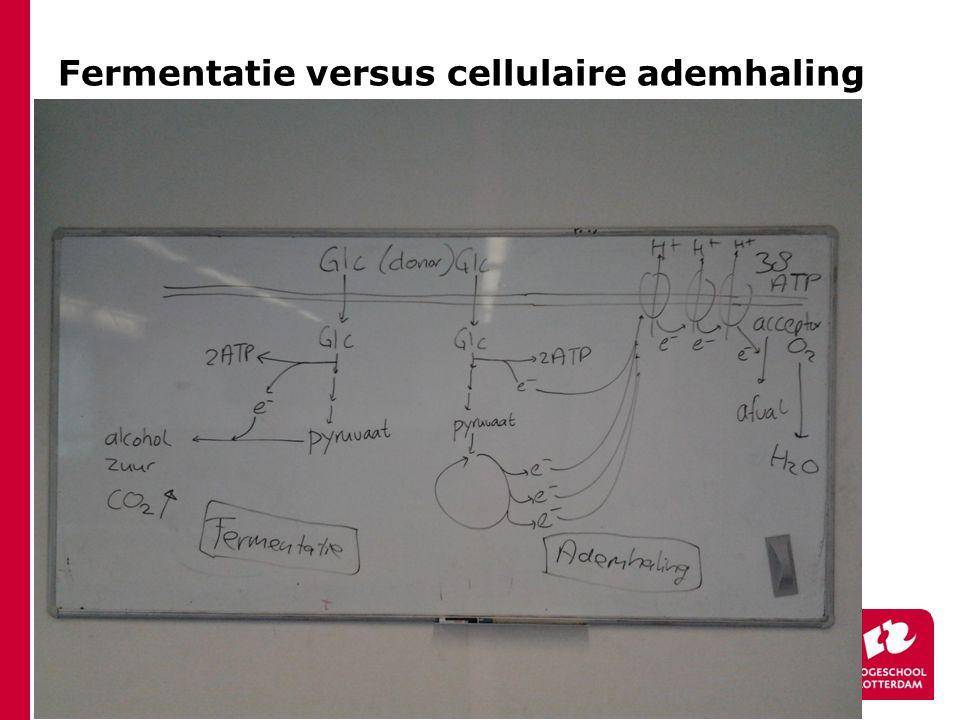 Fermentatie versus cellulaire ademhaling