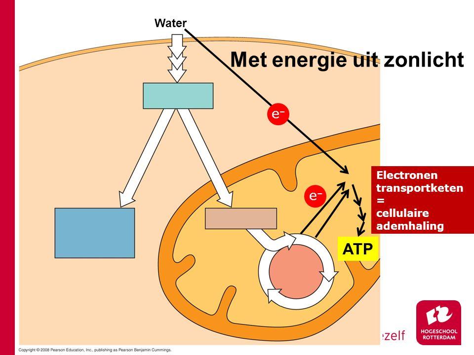 Water e–e– ATP Electronen transportketen = cellulaire ademhaling e–e– Met energie uit zonlicht