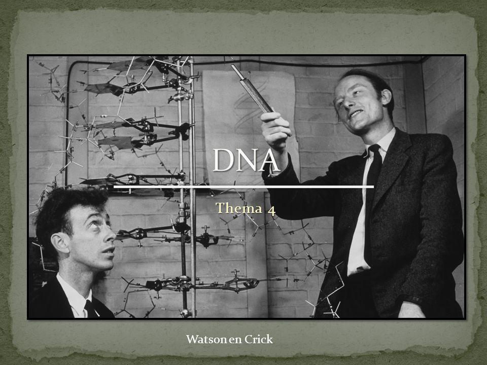 Hoe ziet DNA eruit.Dubbele helix Wat doet DNA. Coderen voor eigenschappen Eiwitten Waar zit DNA.
