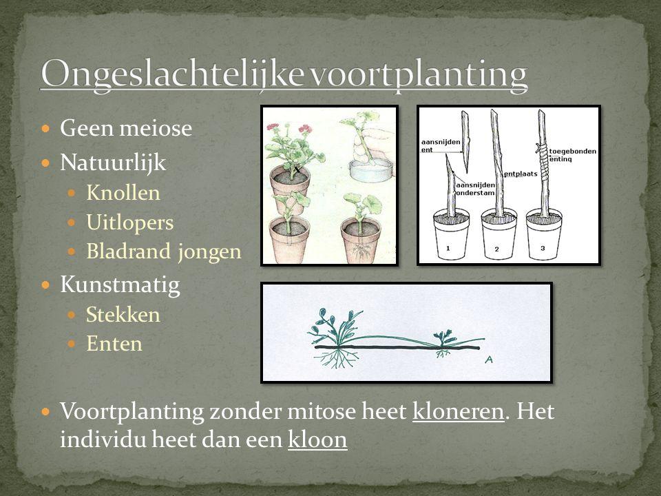 Geen meiose Natuurlijk Knollen Uitlopers Bladrand jongen Kunstmatig Stekken Enten Voortplanting zonder mitose heet kloneren. Het individu heet dan een