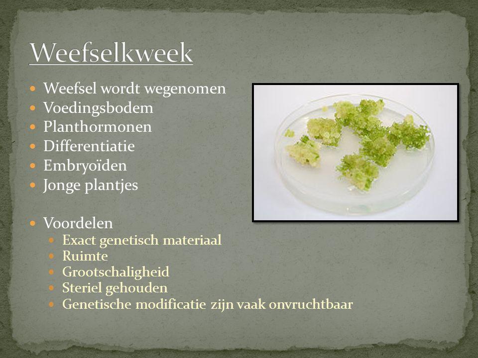 Weefsel wordt wegenomen Voedingsbodem Planthormonen Differentiatie Embryoïden Jonge plantjes Voordelen Exact genetisch materiaal Ruimte Grootschalighe