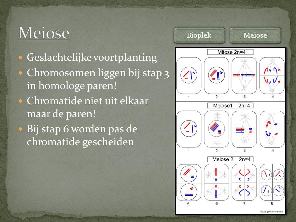 Geslachtelijke voortplanting Chromosomen liggen bij stap 3 in homologe paren! Chromatide niet uit elkaar maar de paren! Bij stap 6 worden pas de chrom