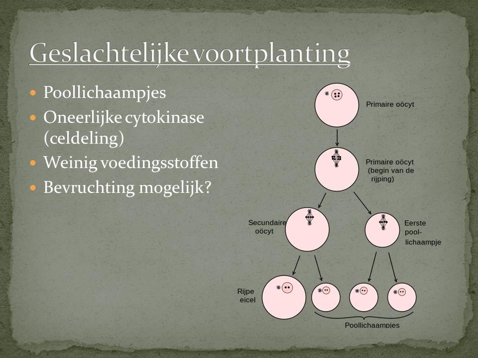 Poollichaampjes Oneerlijke cytokinase (celdeling) Weinig voedingsstoffen Bevruchting mogelijk