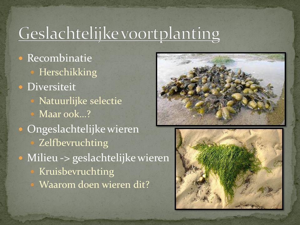 Recombinatie Herschikking Diversiteit Natuurlijke selectie Maar ook….