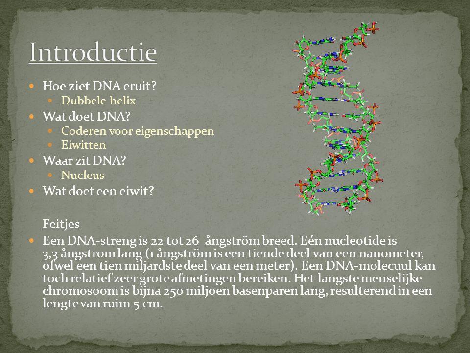 Hoe ziet DNA eruit? Dubbele helix Wat doet DNA? Coderen voor eigenschappen Eiwitten Waar zit DNA? Nucleus Wat doet een eiwit? Feitjes Een DNA-streng i
