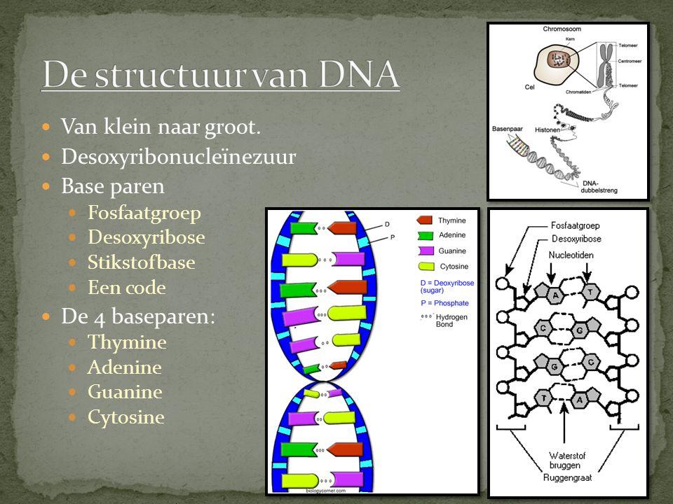 Van klein naar groot. Desoxyribonucleïnezuur Base paren Fosfaatgroep Desoxyribose Stikstofbase Een code De 4 baseparen: Thymine Adenine Guanine Cytosi