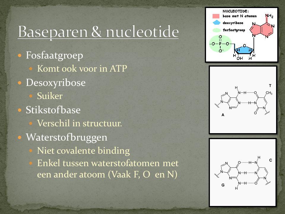 Fosfaatgroep Komt ook voor in ATP Desoxyribose Suiker Stikstofbase Verschil in structuur.