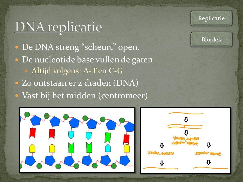 """De DNA streng """"scheurt"""" open. De nucleotide base vullen de gaten. Altijd volgens: A-T en C-G Zo ontstaan er 2 draden (DNA) Vast bij het midden (centro"""