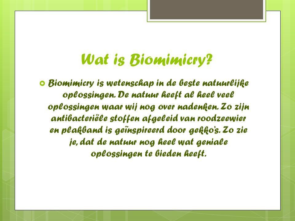 Wat is Biomimicry?  Biomimicry is wetenschap in de beste natuurlijke oplossingen. De natuur heeft al heel veel oplossingen waar wij nog over nadenken