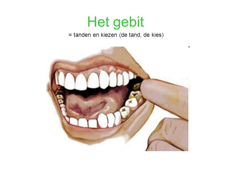 Het gebit = tanden en kiezen (de tand, de kies)