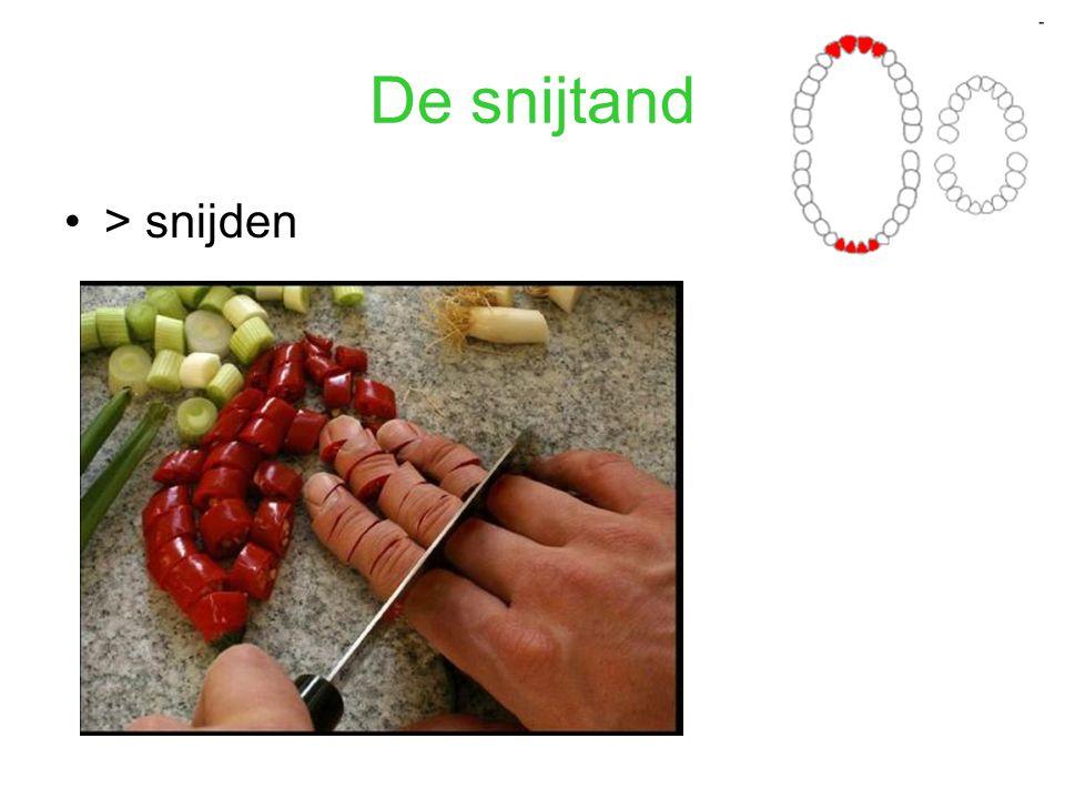 De snijtand > snijden