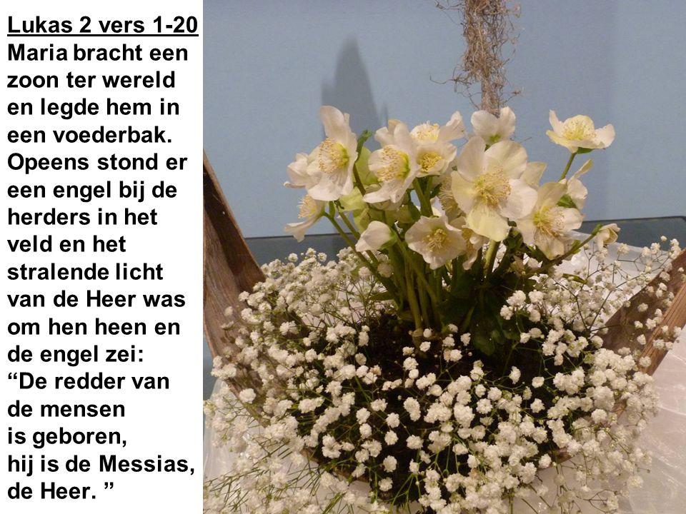 Lukas 2 vers 1-20 Maria bracht een zoon ter wereld en legde hem in een voederbak.