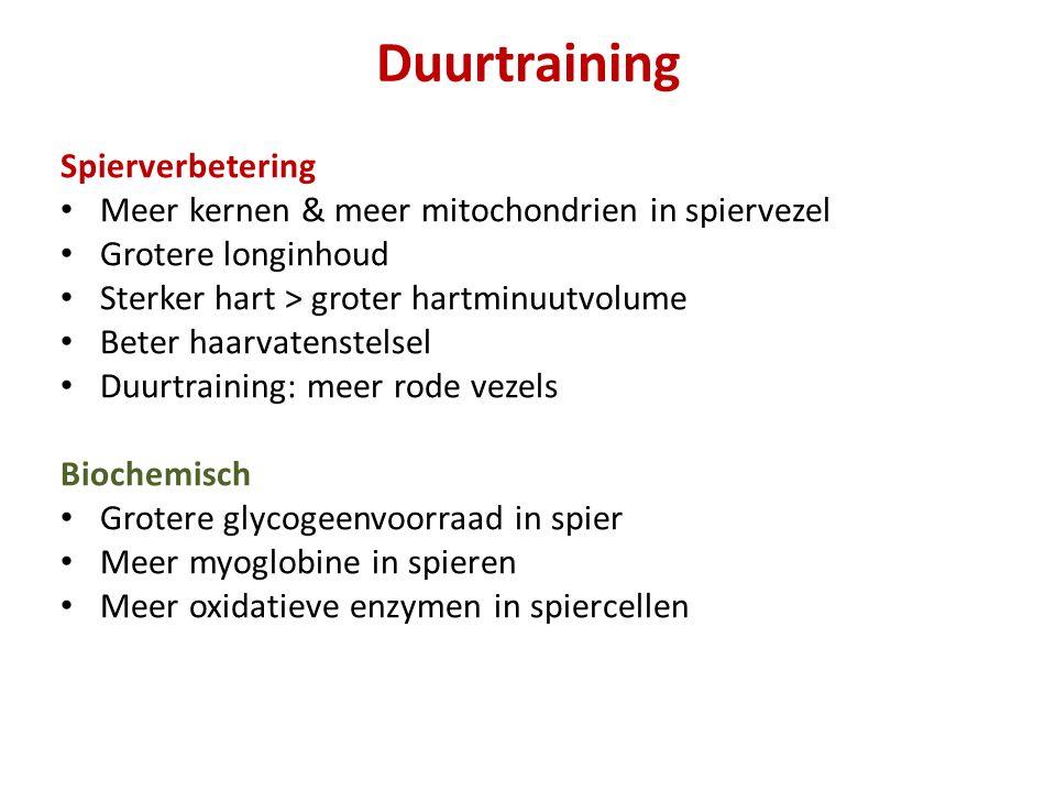 Duurtraining Spierverbetering Meer kernen & meer mitochondrien in spiervezel Grotere longinhoud Sterker hart > groter hartminuutvolume Beter haarvaten