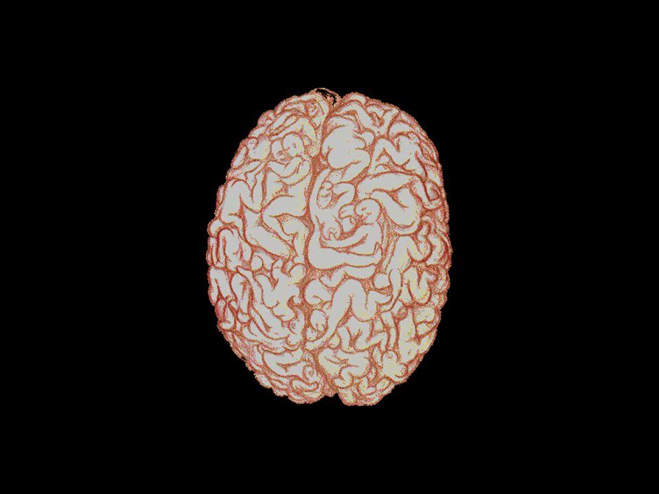 Vervolgens ontrafelen we het mysterie van het functioneren van het mannelijk brein: