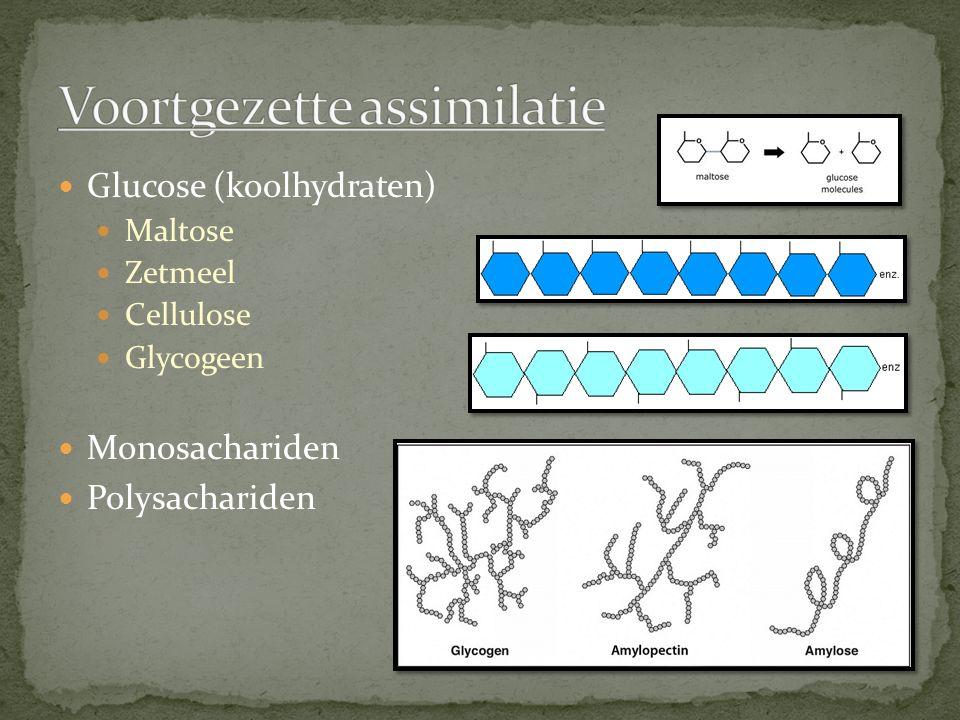 Glucose (koolhydraten) Maltose Zetmeel Cellulose Glycogeen Monosachariden Polysachariden