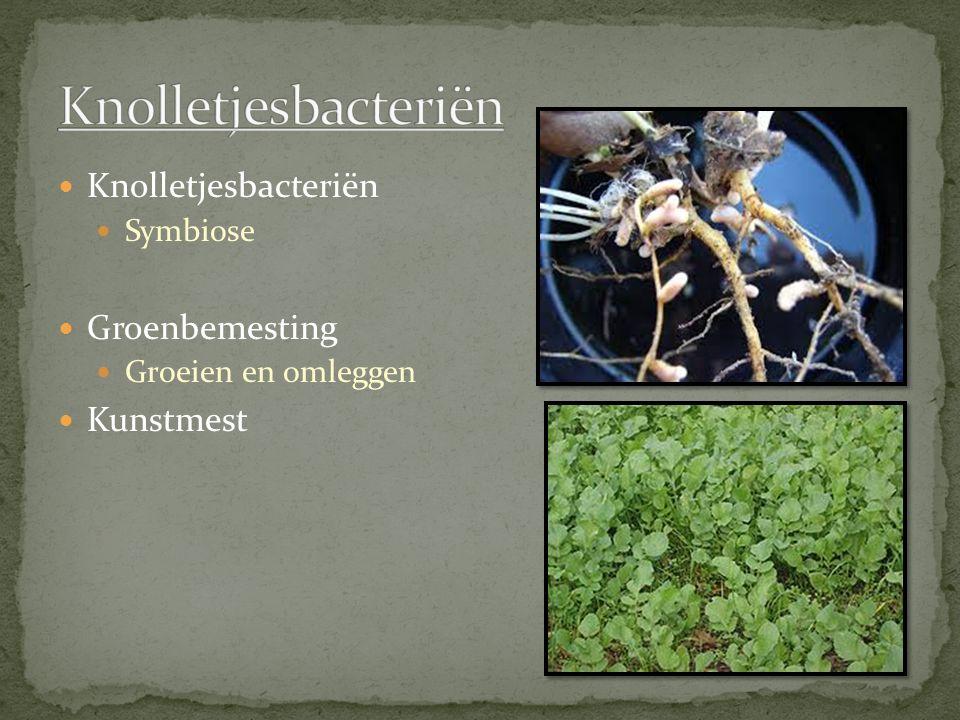 Knolletjesbacteriën Symbiose Groenbemesting Groeien en omleggen Kunstmest