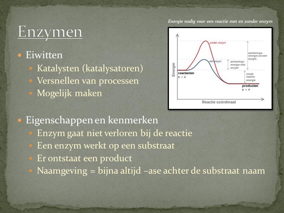 Eiwitten Katalysten (katalysatoren) Versnellen van processen Mogelijk maken Eigenschappen en kenmerken Enzym gaat niet verloren bij de reactie Een enzym werkt op een substraat Er ontstaat een product Naamgeving = bijna altijd –ase achter de substraat naam Energie nodig voor een reactie met en zonder enzym