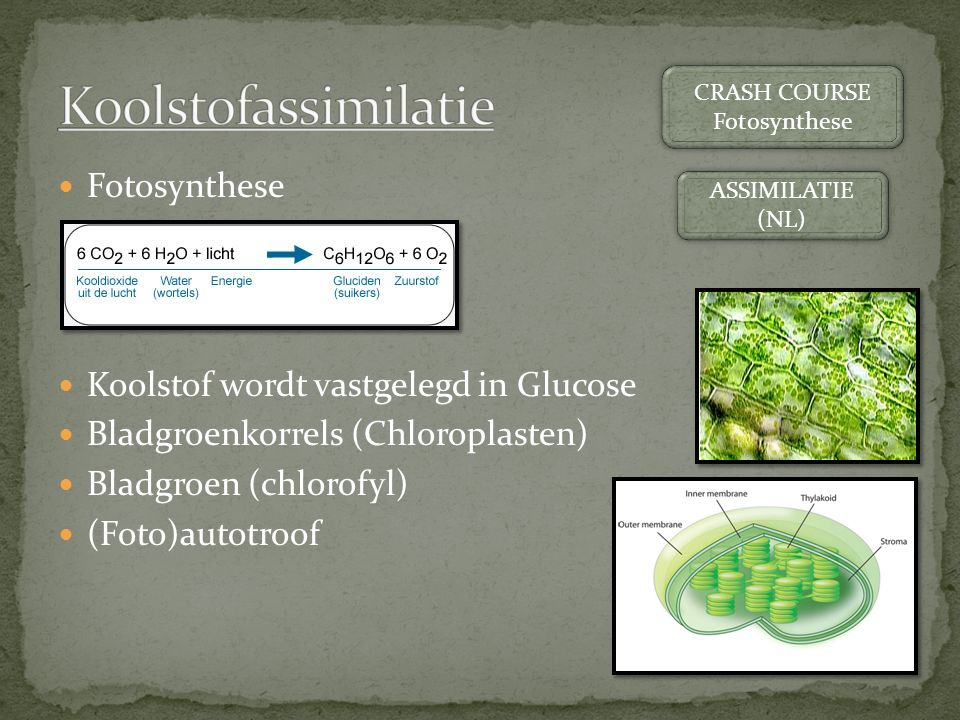 Fotosynthese Koolstof wordt vastgelegd in Glucose Bladgroenkorrels (Chloroplasten) Bladgroen (chlorofyl) (Foto)autotroof CRASH COURSE Fotosynthese CRASH COURSE Fotosynthese ASSIMILATIE (NL) ASSIMILATIE (NL)