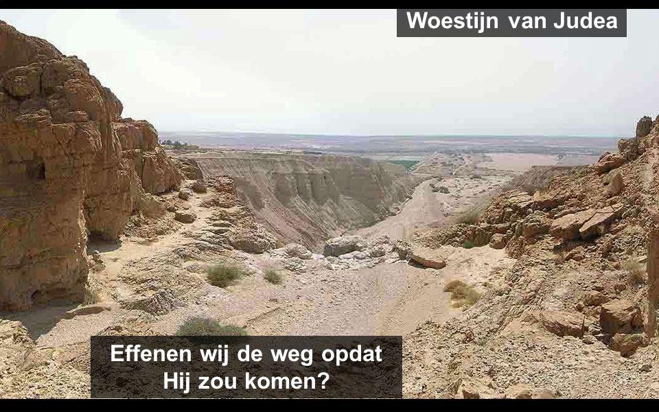 ZONDAG 1 Op weg, erop lettend overeind te blijven op de dag van zijn Komst ZONDAG 2 Effen de weg met Johannes de Doper ZONDAG 3 God komt naar ons om ons te ontmoeten ZONDAG 4 Op weg met Maria om ons te bezoeken Weg in de woestijn van Judea
