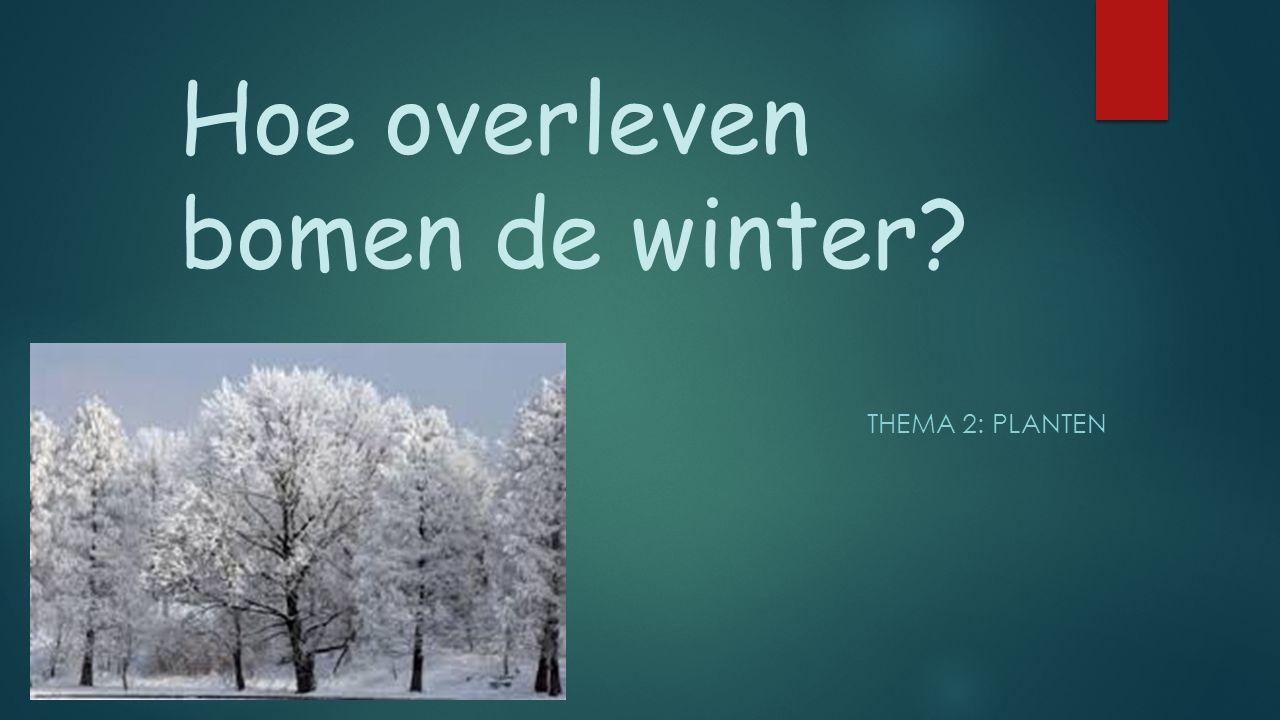 Hoe overleven bomen de winter? THEMA 2: PLANTEN