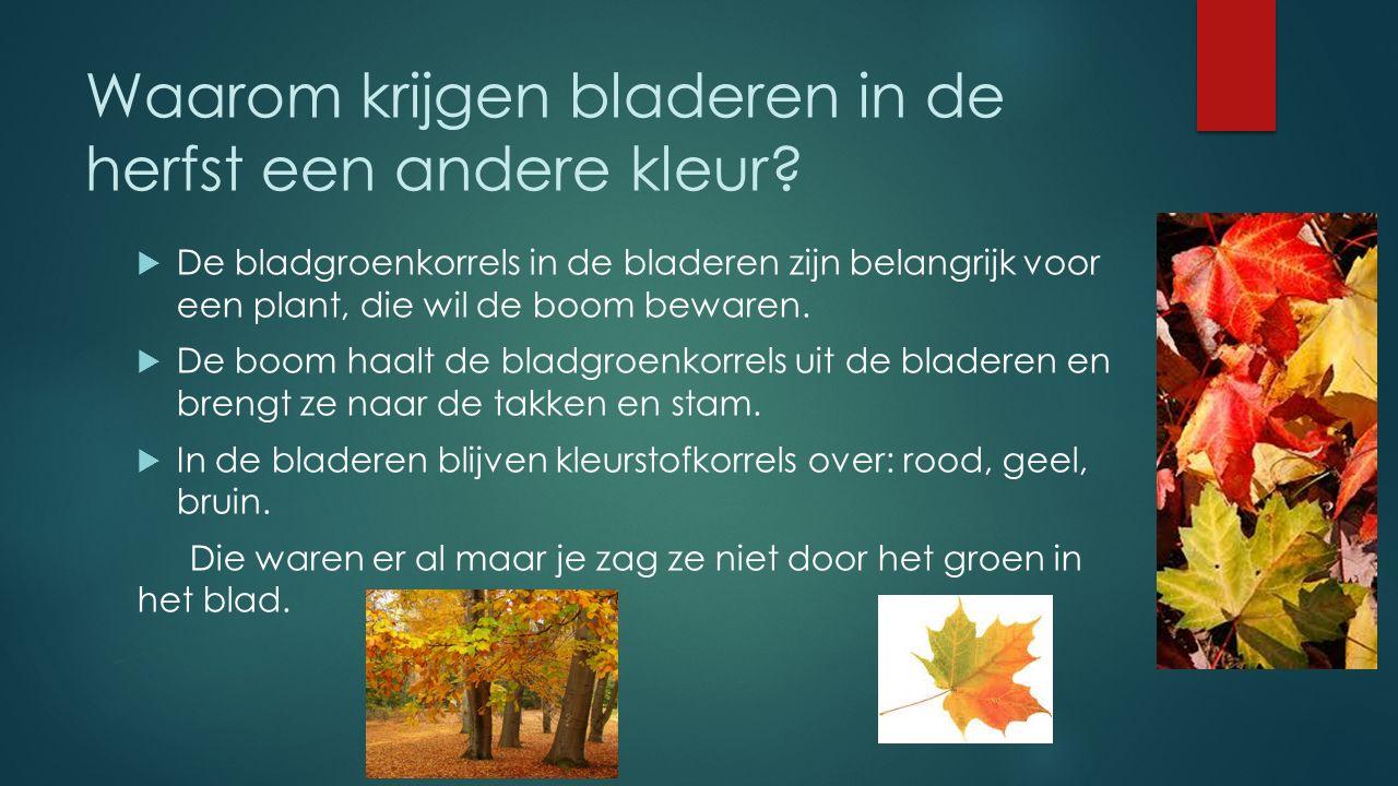 Waarom krijgen bladeren in de herfst een andere kleur.
